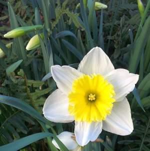 C 39 est l 39 heure du m nage de printemps et du retour du for Heure de jardinage